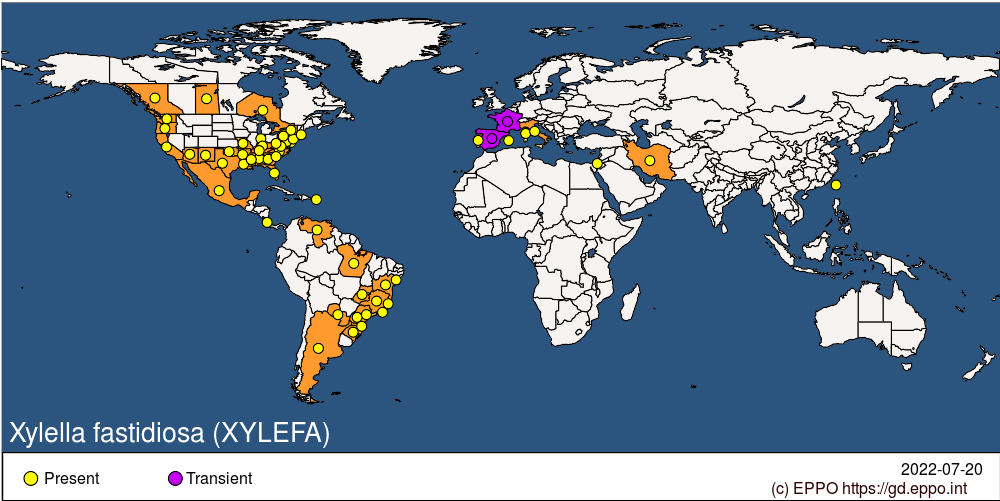 Xylella fastidiosa (XYLEFA)[World distribution]| EPPO Global Database